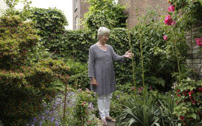 Struinen door de Tuin van Marijke