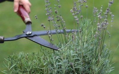 GGRG Nieuws en tuinkalender september